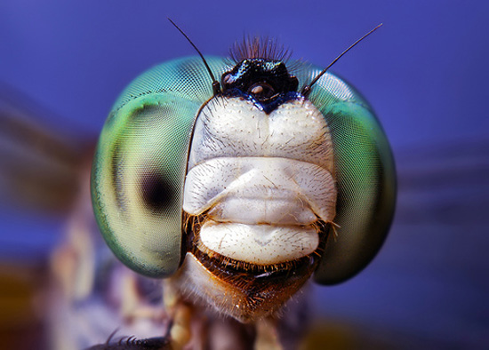Crazy Insect Photography